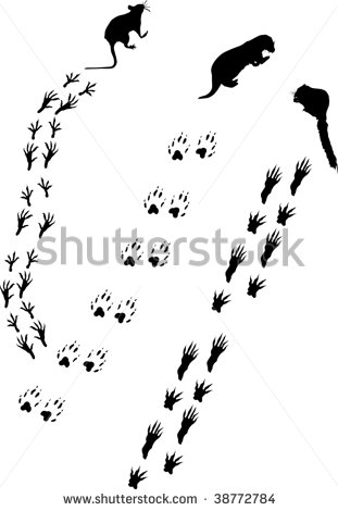 Squirrel Tracks Clip Art Tracks Collection   Stock