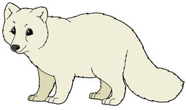 Arctic Fox Clipart Cartoon Animal   Arctic Fox