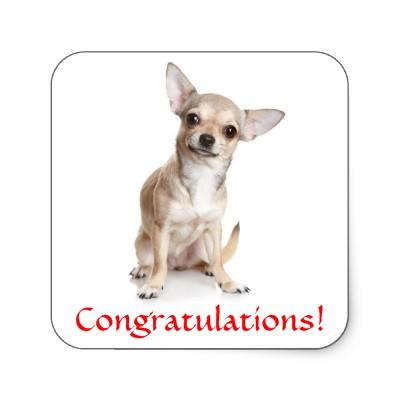 Congratulations funny dog - photo#19