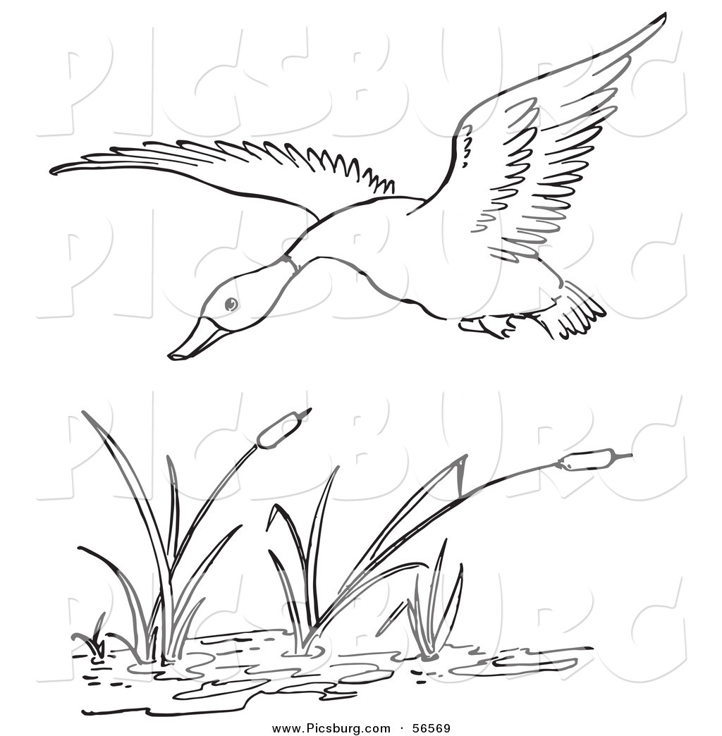 Line Art Duck : Pond duck hunting clipart suggest