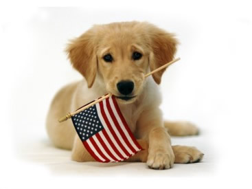 Pet Puppy Ready To Celebrate American Independence Day 4th Of July