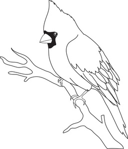 Cardinal Black And White Clipart - Clipart Kid