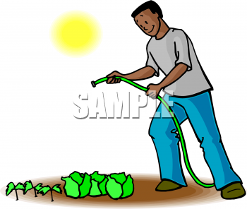 Clipart Image Of An African American Man Watering Lettuce