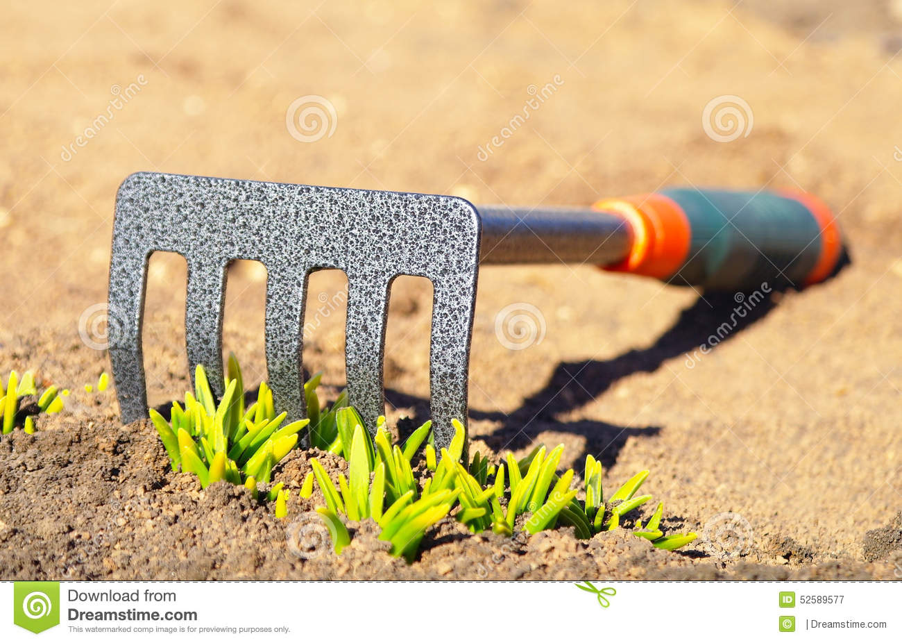 Rake Lying On The Ground Stock Photo   Image  52589577