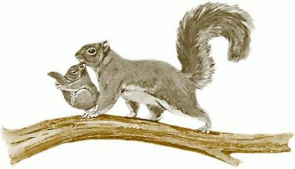 Squirrel Pictures Squirrel Cartoons Squirrels Climbing Trees Baby