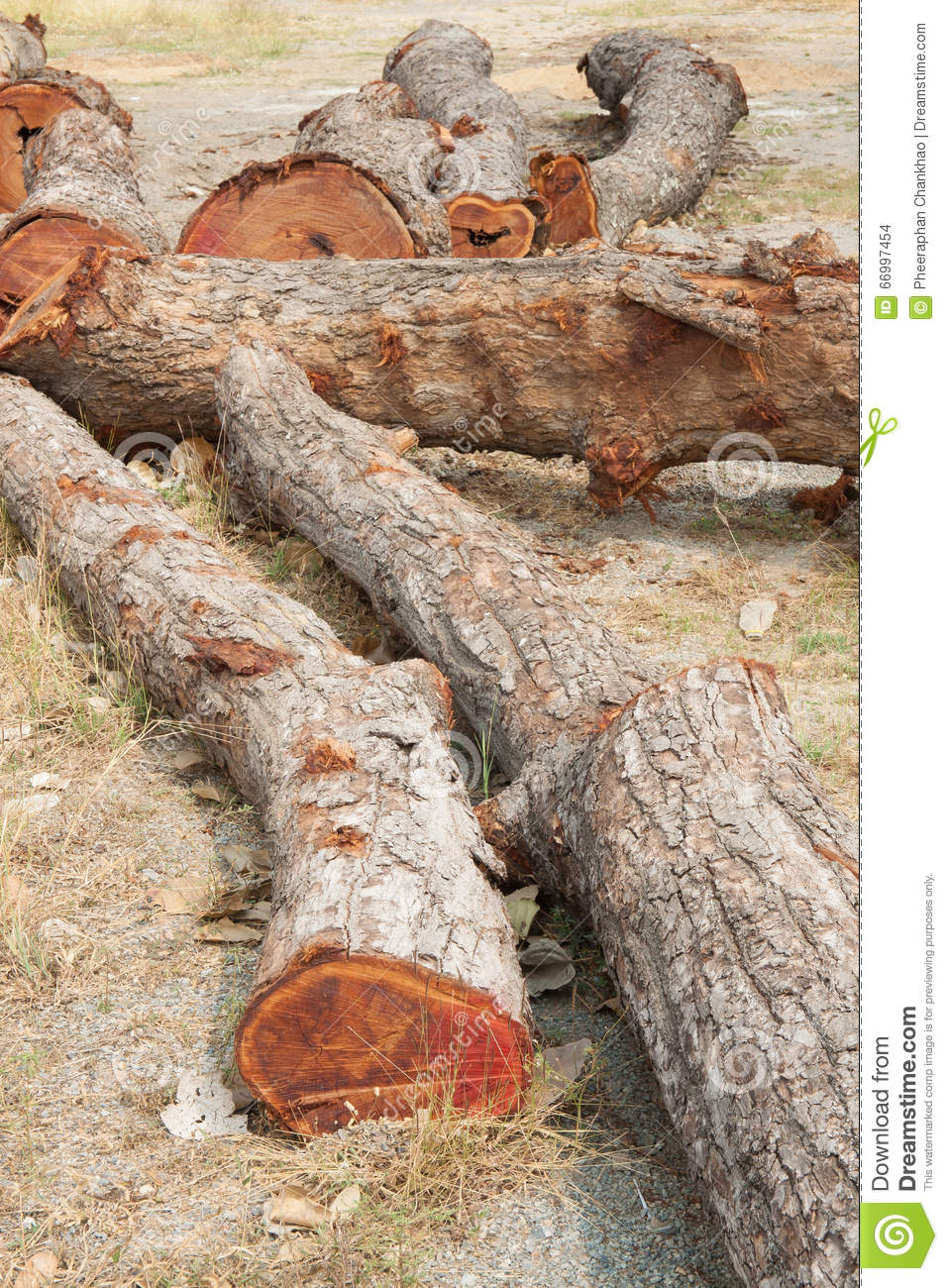 Timber On The Ground Stock Photo   Image  66997454