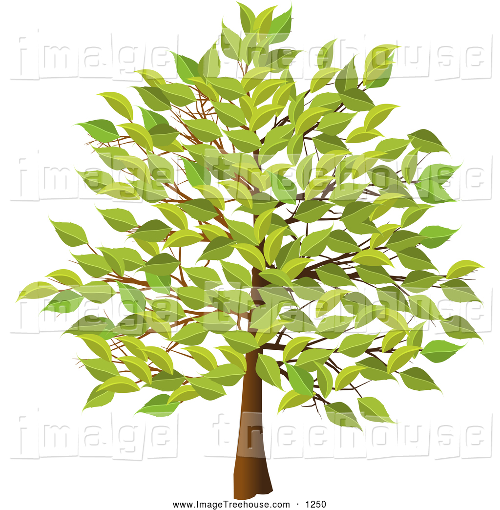 Summer Tree With Green Leaves Tree Clip Art Elaine Barker
