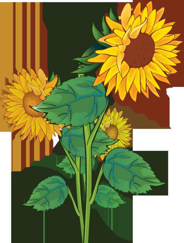 Clip Art Sunflower Clip Art rustic sunflower clipart kid gallery for clip art