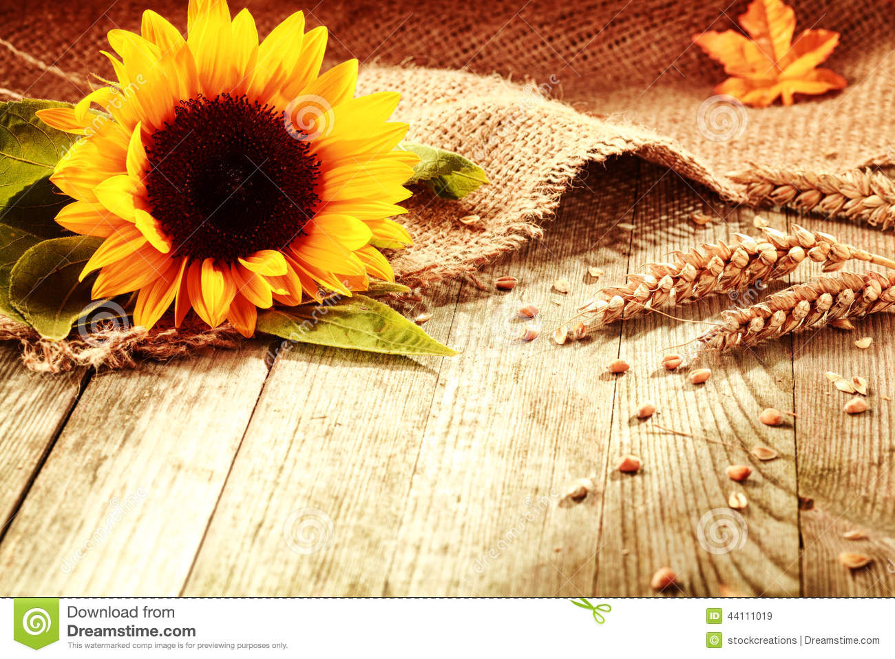 Rustic Background With A Bright Colorful Yellow Sunflower
