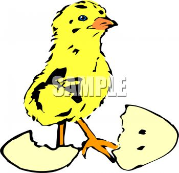Chick Hatching From Egg   Royalty Free Clip Art Picture