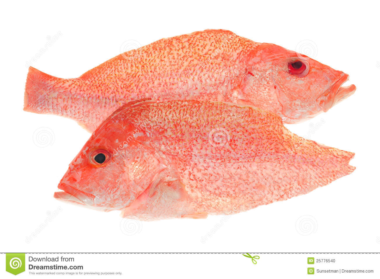 Red snapper clipart clipart suggest for Red snapper fish