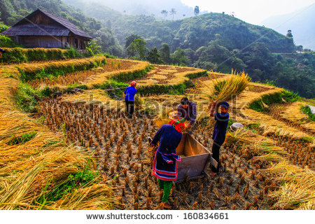 Developing Country Stock Photos Images   Pictures   Shutterstock