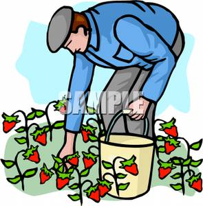 Picking Vegetables Clipart   Clipart Panda   Free Clipart Images