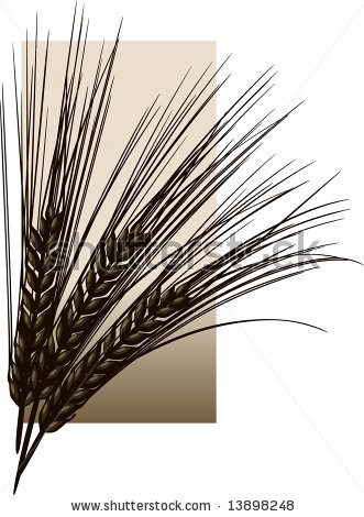 Barley Clip Art   Decorations   Pinterest