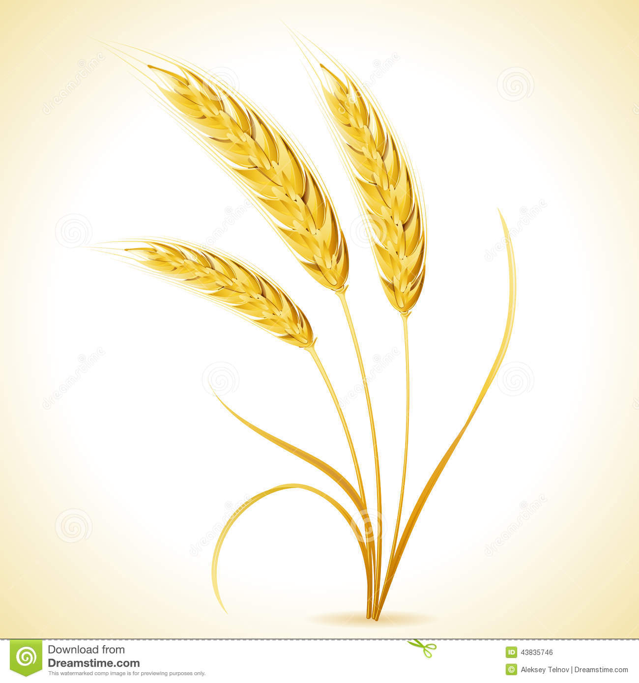 Barley Clip Art Ears Of Barley Royalty Free