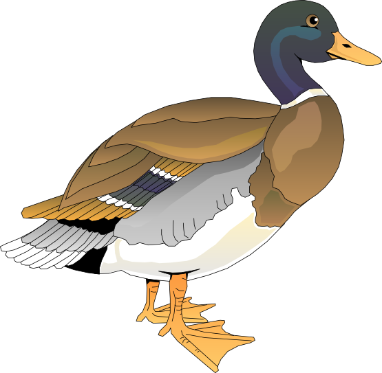 Duck Clip Art   Images   Free For Commercial Use