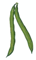 Green Beans   Http   Www Wpclipart Com Food Vegetables Beans Fresh