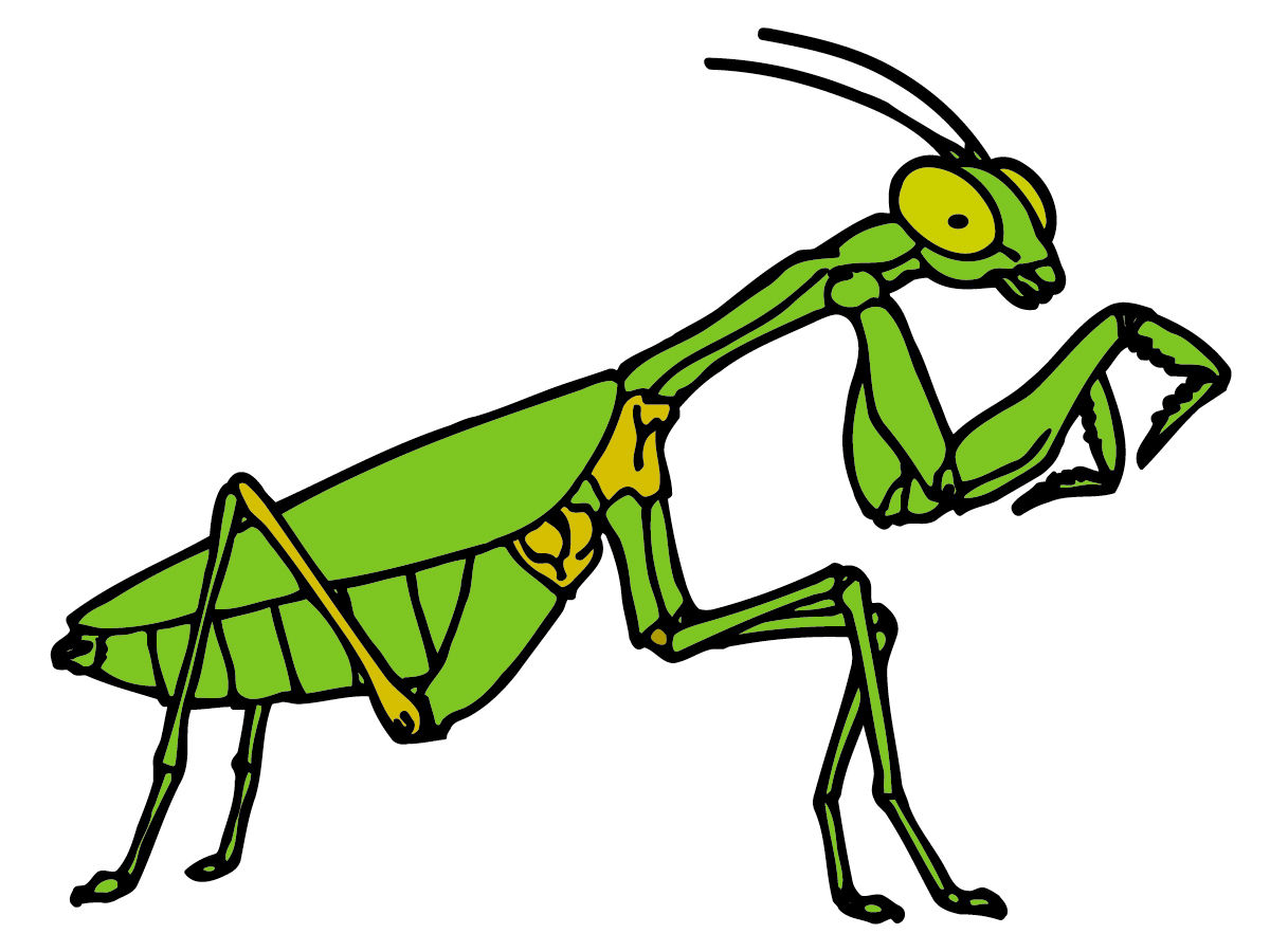 Clip Art Insect Clip Art cricket insect clipart kid best