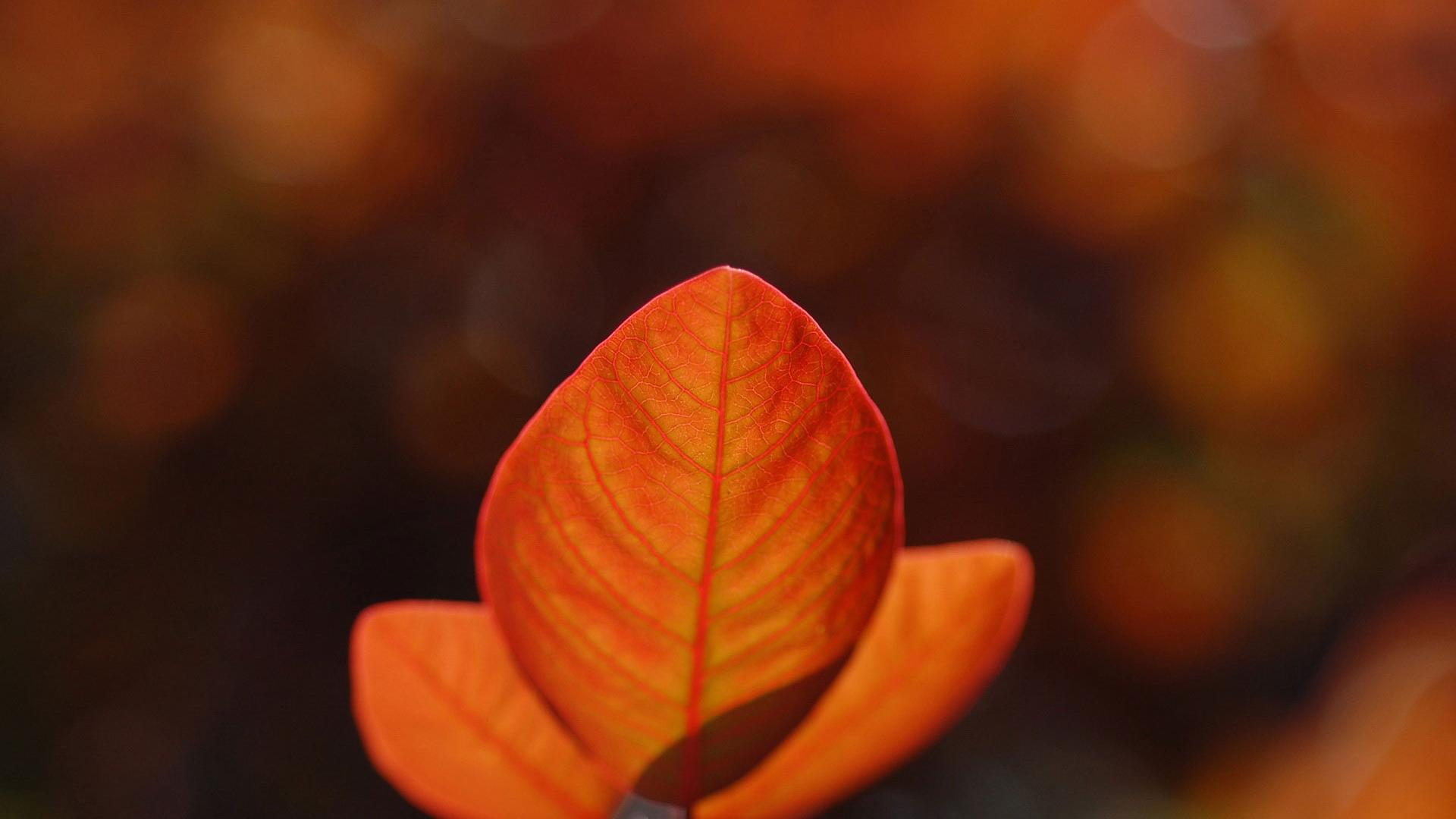 Download Gallery Nature Summer Twilight Lake Free Desktop Backgrounds