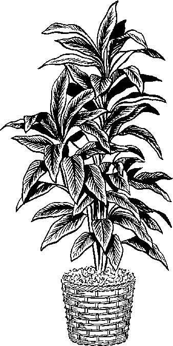 Plant clip art black and white