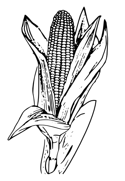 Corn Plant Black And White Clipart - Clipart Suggest