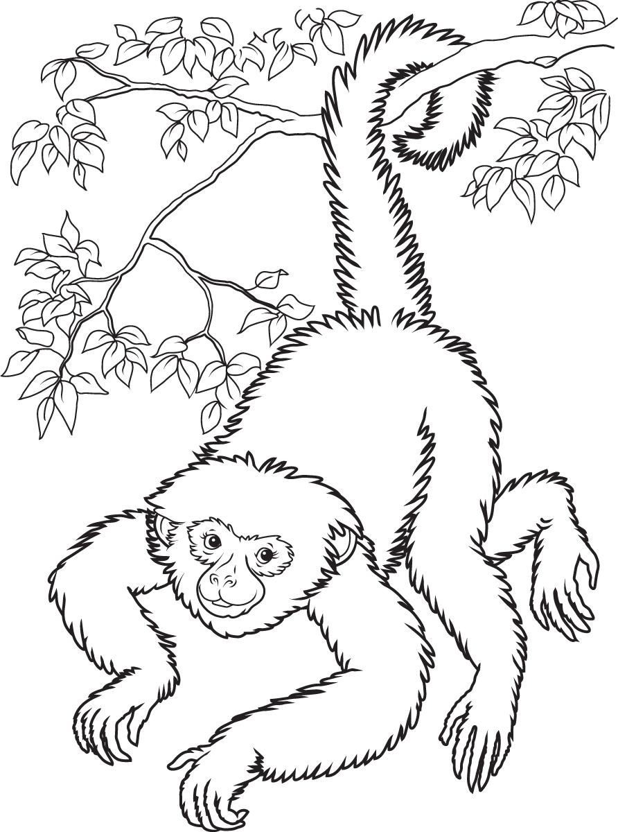 realistic rainforest monkey clipart clipart suggest
