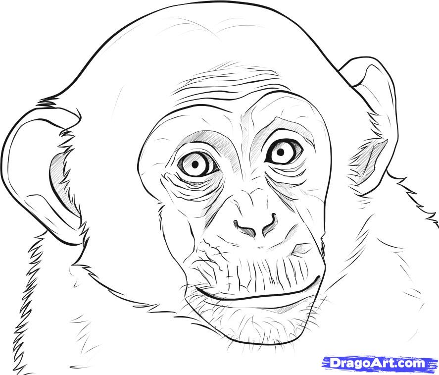 how to draw an clipart ape face