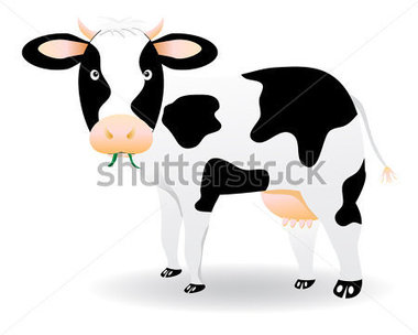 Download Source File Browse   Animals   Wildlife   Black And White Cow