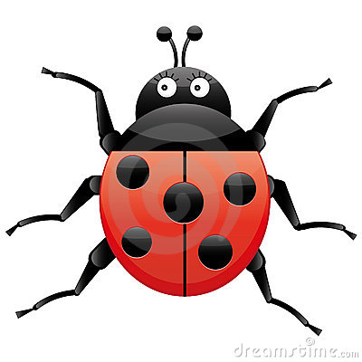 Funny Ladybug Looking Left Cartoon Character Isolated On White