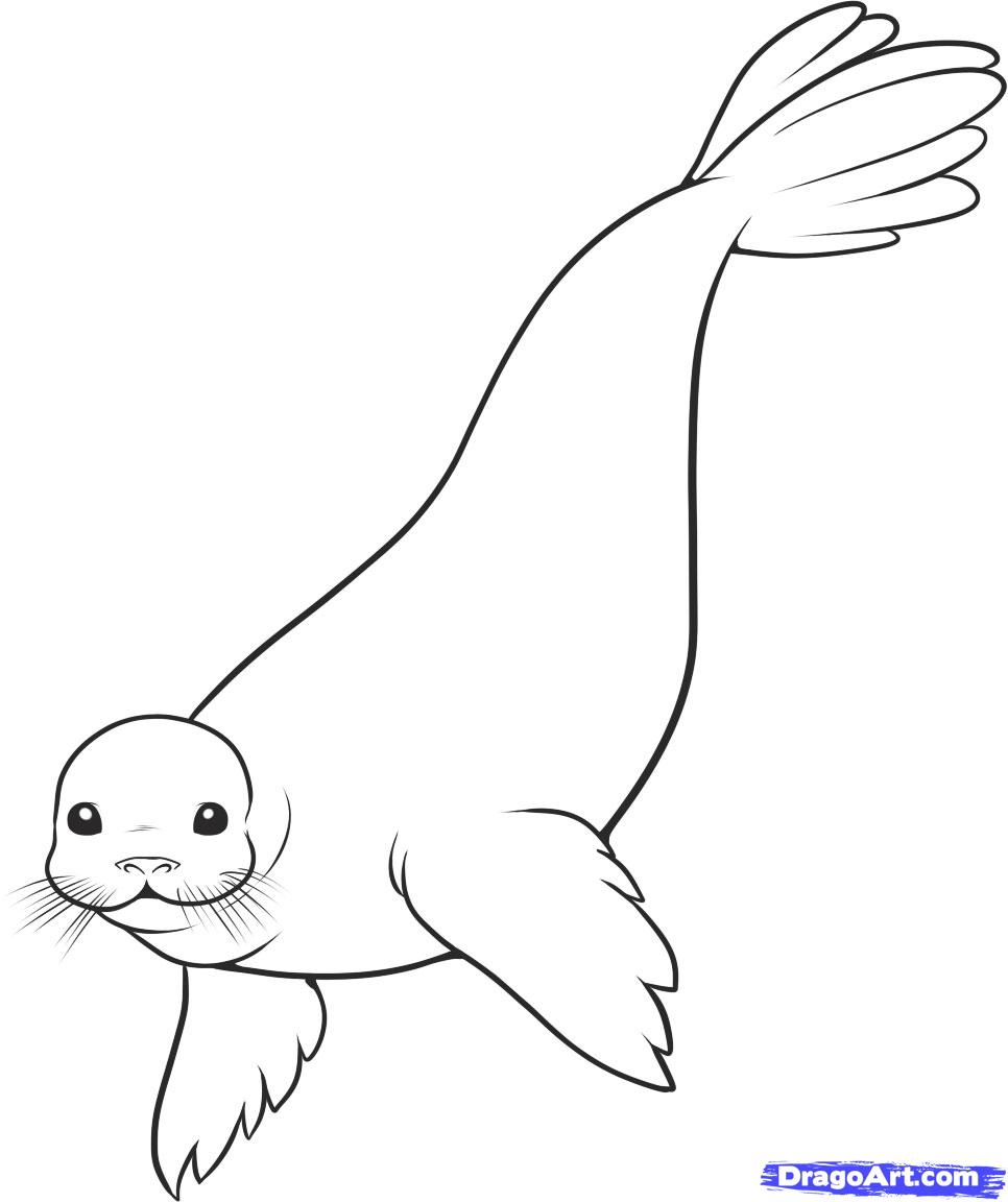 How To Draw A Seal Step By Step Sea Animals Animals Free Online