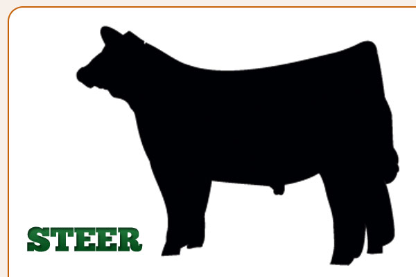 Clip Art Show Steer Clip Art show steer clipart kid outline cliparthut free clipart
