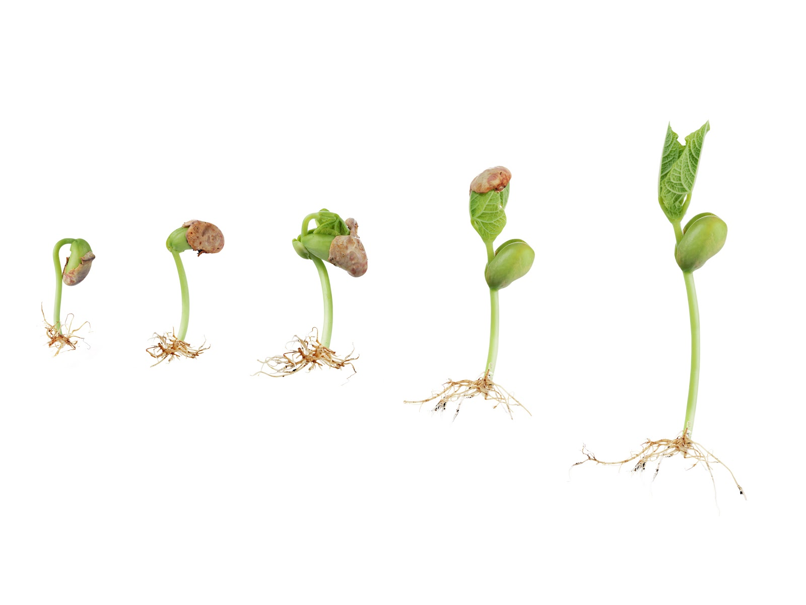 Seed Sprouting Clipart - Clipart Suggest