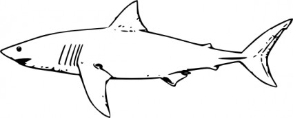 White Shark Clip Art Free Vector In Open Office Drawing Svg    Svg