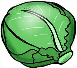 Tags Cabbage Vegetables Did You Know Cabbage Is A Green Leafy