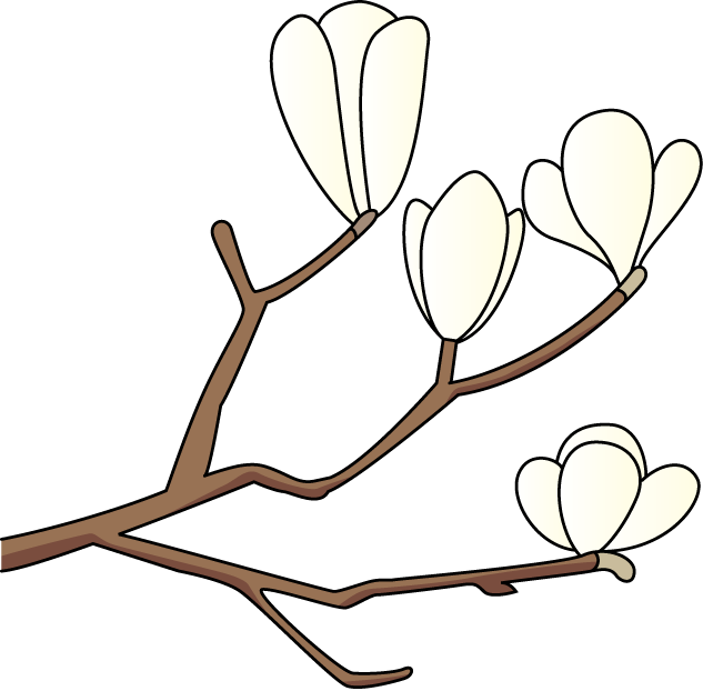Magnolia Flower Clipart - Clipart Kid White Magnolia Flower Drawings