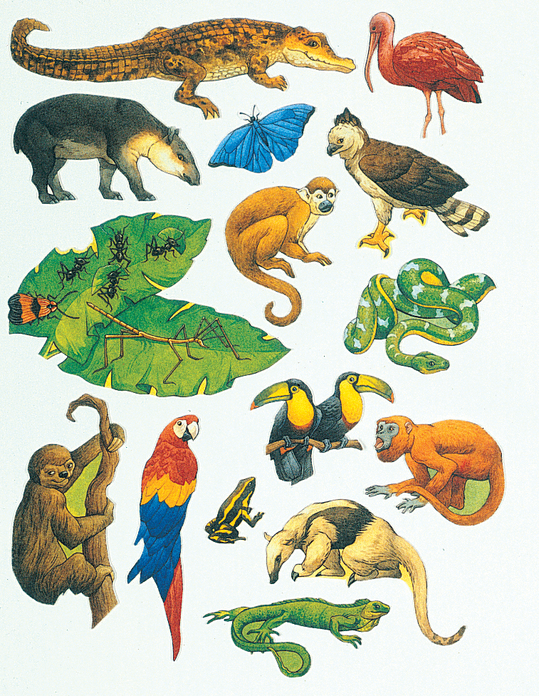 Rainforest Animals Clip Art