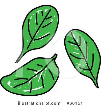 Spinach Clip Art