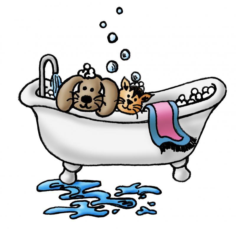 Anna S Dog Grooming