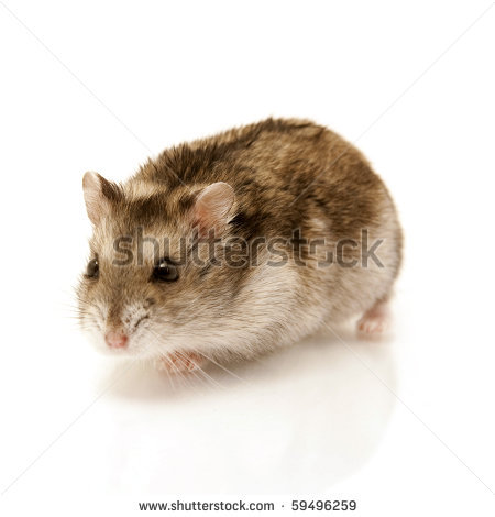 Cute Hamster Stock Photos Illustrations And Vector Art
