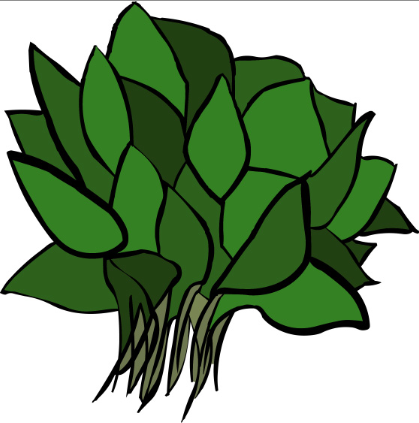 Go Back   Gallery For   Spinach Clip Art