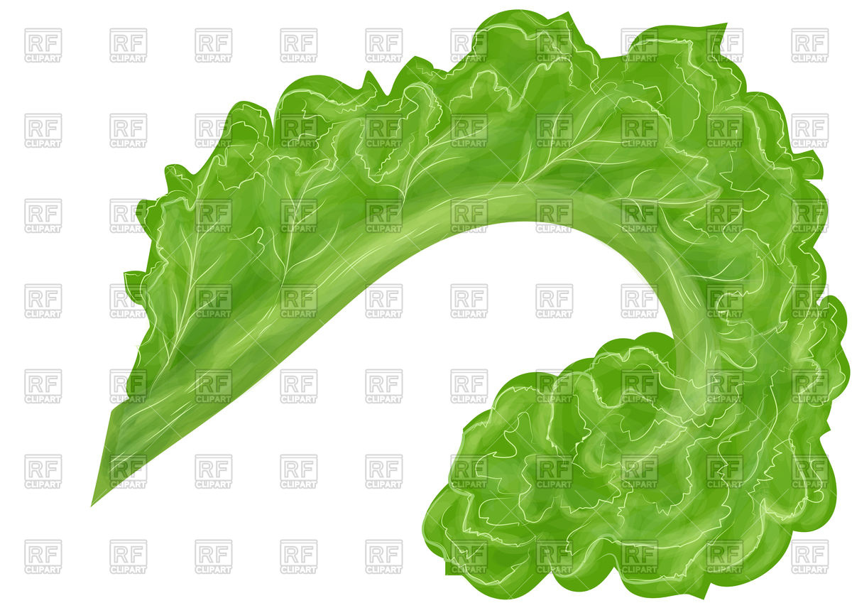 Kale 97070 Food And Beverages Download Royalty Free Vector Clipart