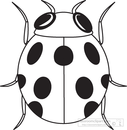 Animals   Ladybug Insects Black White Outline 984   Classroom Clipart