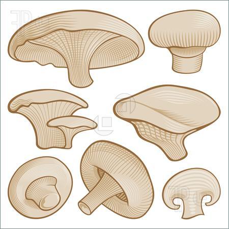 Pizza Mushroom Clipart Mushroom Slice Clip Art