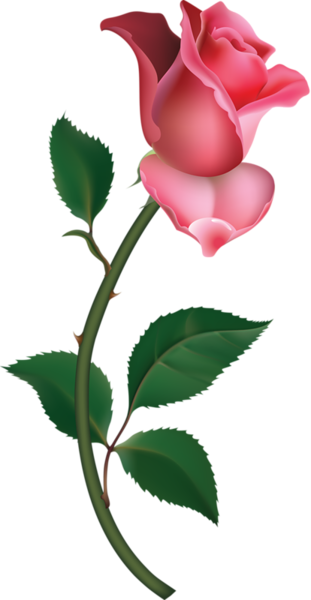Rose Bud On Branch Pink Large   Free Images At Clker Com   Vector Clip