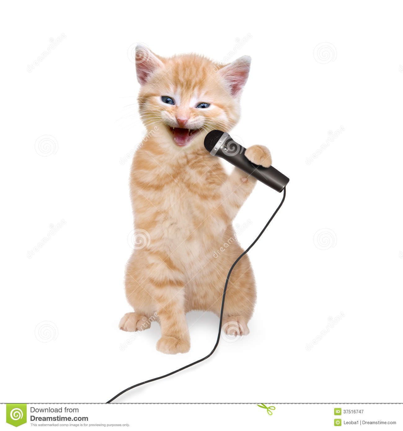 Cat Kitten Singing Into Microphone On White Background