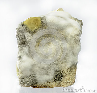 Bread Mold Isolate On White Background