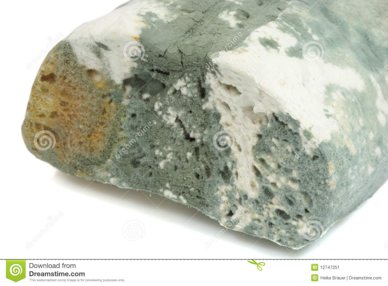 Mold Bread Stock Image   Image  12747251
