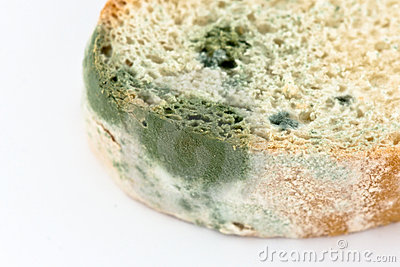 Mold On Bread Royalty Free Stock Photography   Image  13442767