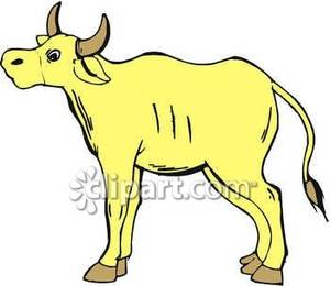 Yellow Cow   Royalty Free Clipart Picture