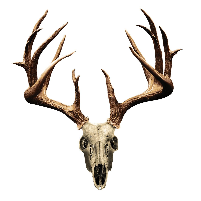 ... -deer-skull-clip-art-more-deer-skull-clip-art-aFl29S-clipart.jpeg
